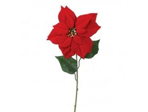 Χριστουγεννιάτικο Αλεξανδρινό Λουλούδι